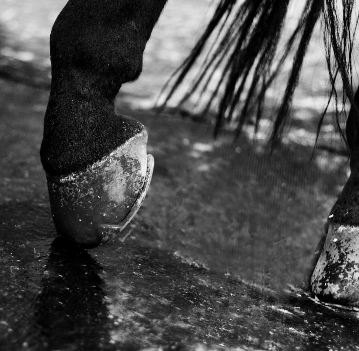 Horse Hooves Art