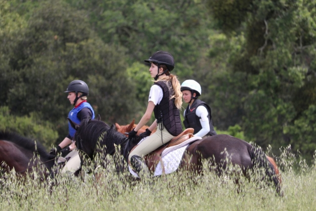 Cross Country horses